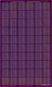 BISOL_Spectrum_Charming_Purple_CR (Mały)